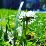 flower in bloom